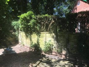 Shady garden with wonky fencing